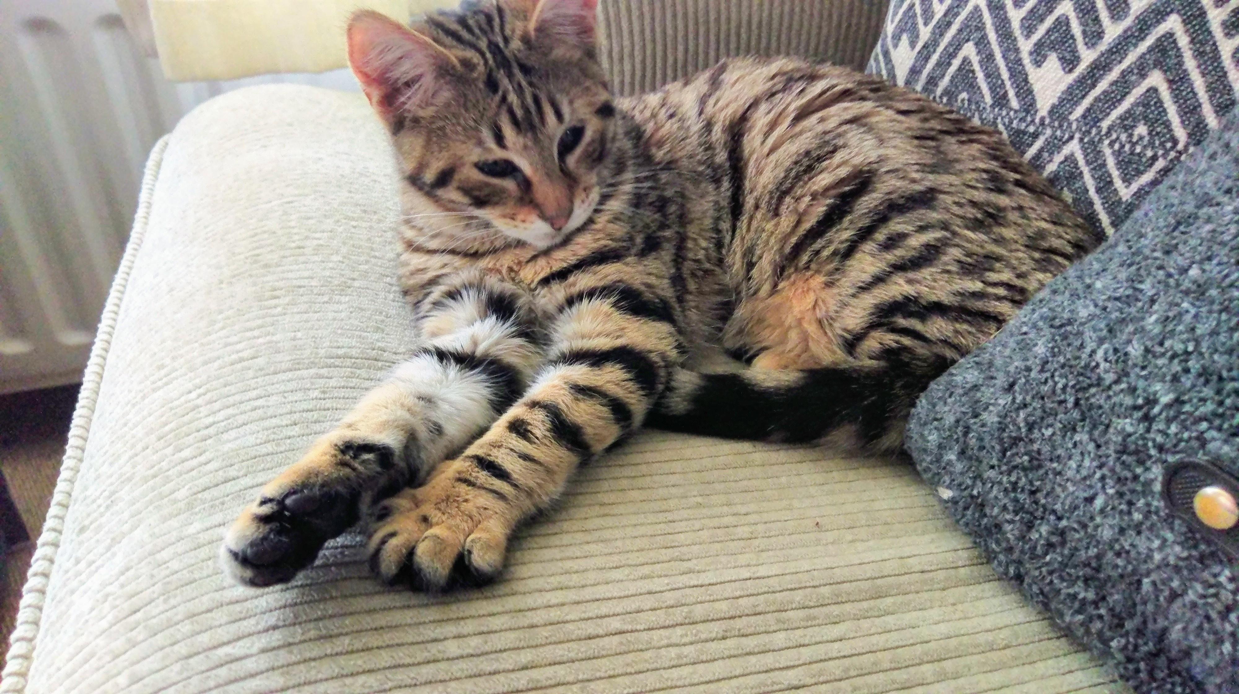 imag3769-jpg.7930, kan het zijn dat mijn kat een savannah is?, Info en vragen voor katteneigenaren, Kattenforum SjEd, 13093, imag3769-jpg.7930, 21:09, 18 jan 2019, 18 jan 2019, 3838, 21:09