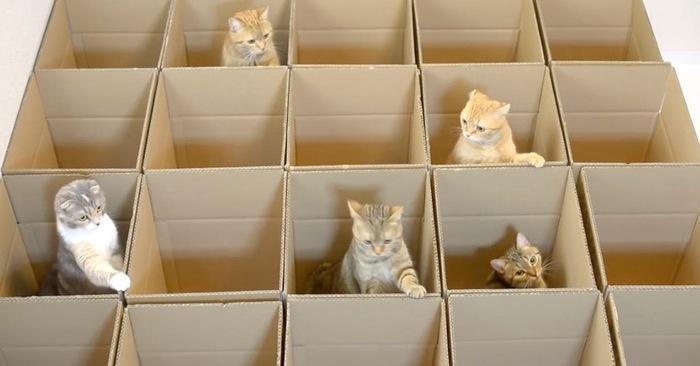katten-in-dozen.jpg