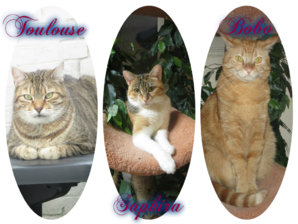 Toulouse Saphira & Bobo.jpg