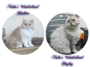 Cheshire & Hayley.jpg