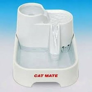 Cat-mate-drinkfontein.jpg