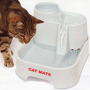 Kat-drinkt-2.jpg