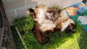 SjEd Kattengras2_1.jpg