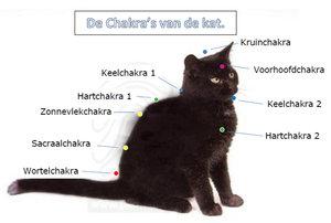 Chakra's van de kat