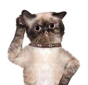 Communiceren met je kat