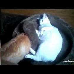 Kat in het bakkie...
