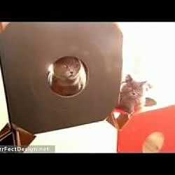 Cute cats playing in MiauModul Cardboard Cubes - YouTube