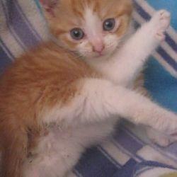 Dexter als kitten...