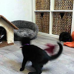 Kitten Krokus versus Starlette