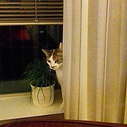 Pip speelt verstoppertje..