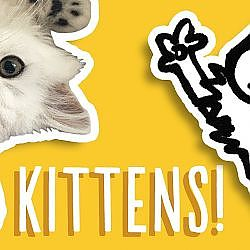 Kittens Being Cute Compilation - Simon's Cat | Snaps