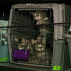 What's That Smell? Jackson Galaxy's Got 50 Kittens In The Car | My Cat From Hell