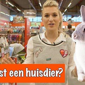 Wat kost een huisdier?   DierenpraatTV