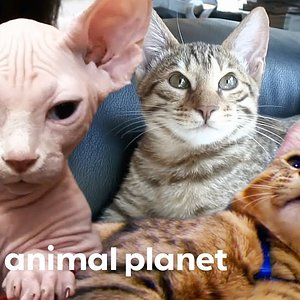 3 Insanely Cute Feline Companions | Cats 101